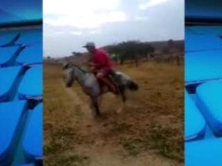 Homens usam cordas e paus para bater em cavalo no DF e causam revolta nas redes sociais