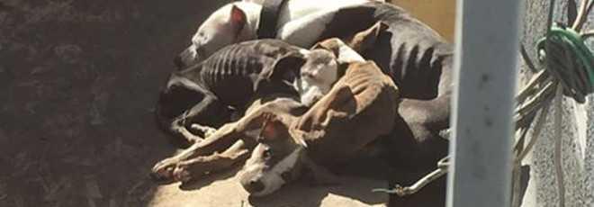 A foto comovente que salvou 9 cães desnutridos