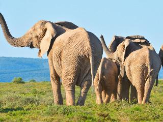 Decisão histórica: O mundo acabou de dar um enorme passo pelos elefantes