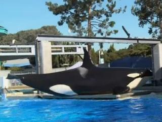 EUA: Ativistas protestam contra a proposta do SeaWorld para expandir os tanques das orcas