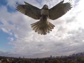 Não está fácil viver no céu! Animais silvestres têm um novo inimigo: os drones