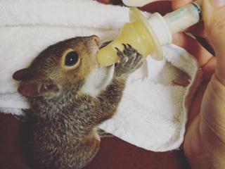 Mulher encontra filhote de esquilo do bebê se afogando numa enchente e o resgata