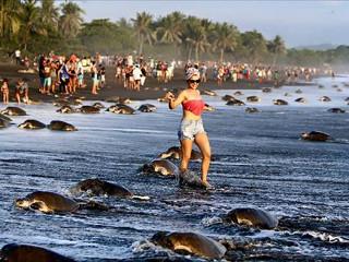 EUA turistas peixe H