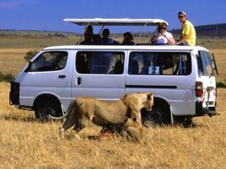 Ecoturismo ameaca animais2 H