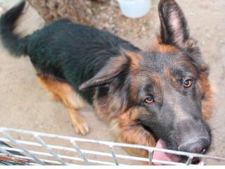 Espanha: Madri proibirá o sacrifício de animais abandonados