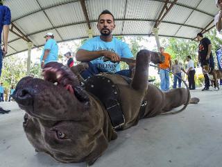 Honduras aprova lei que proíbe animais em circos e brigas de cães