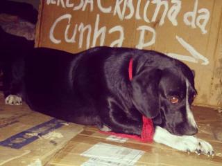 Após reportagem, moradora de rua consegue casa, mas perde companheira em Belo Horizonte, MG
