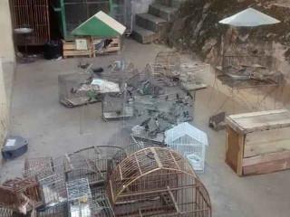 Homem é preso suspeito de manter 300 pássaros em cativeiro no município de Raposos, MG