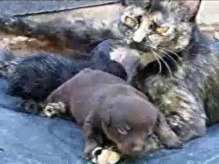 Cadelinha rejeitada ao nascer é adotada por gata