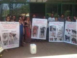 Ativistas questionam UFV por uso de cães saudáveis em pesquisa científica em Viçosa, MG