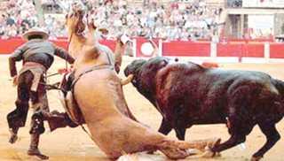 Proibidos animais em circos e rodeios em Contagem, MG