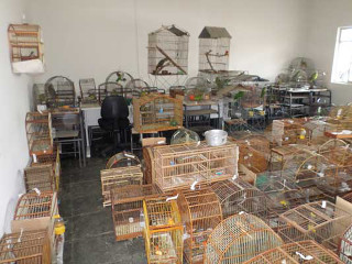 Operação contra tráfico de animais aplica quase R$ 1 milhão em multas, em Minas Gerais
