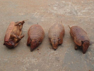 Cinco caçadores são autuados em R$ 10 mil por crime ambiental em Brasilândia, MS