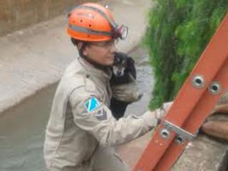 Bombeiro resgata cão em córrego e comove população em Campo Grande, MS