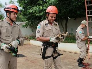 Bombeiros resgatam gato de árvore e frentistas ganham novo mascote