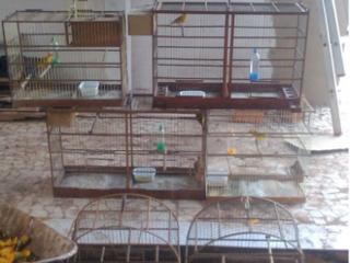 Homem é detido após denúncia sobre entregas de animais silvestres em seu domicílio, em Corumbá, MS