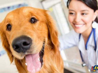 Vigilância Sanitária realizada campanha de castração de cães e gatos em São Gabriel do Oeste, MS