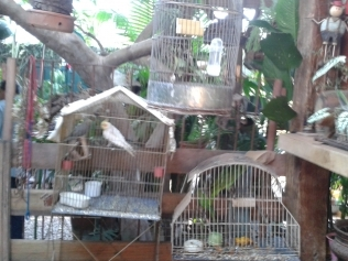 Polícia apreende 20 pássaros criados em cativeiro em Cuiabá, MT