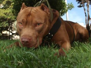 Mulher é detida após sacrificar cão que estaria fora de controle em Sorriso, MT
