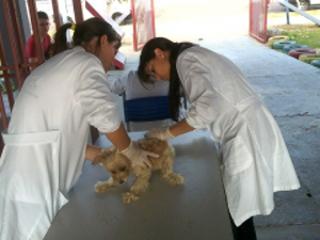 Mais de 12 mil cães e gatos começam ser vacinados dia 13 contra raiva em Sorriso, MT