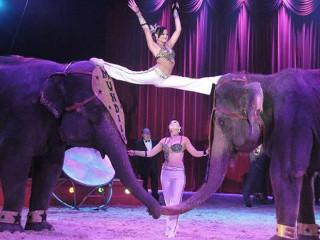 México: Guadalajara proíbe circos com animais