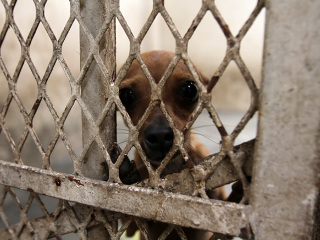 Mexico proibido eletrocutar cachorros H