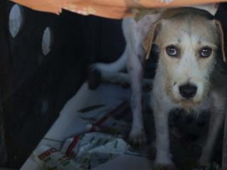 'Semana dos Peludinhos' arrecada fundos para cães que vivem na UFPA em Belém, PA