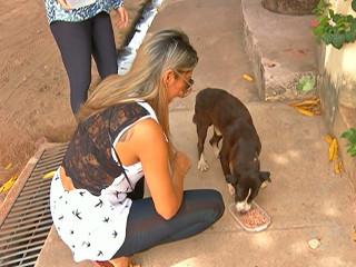 Associação resgata e cuida de animais abandonados em Santarém, PA