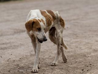 Sessão especial da Câmara Municipal discutirá a situação dos animais abandonados nas ruas de Cajazeiras, PB