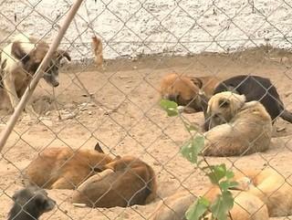 PB: Campina Grande realiza atividades para divulgar direitos dos animais