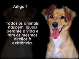 PB: Prefeitura de Campina Grande promove Semana de Conscientização dos Direitos dos Animais