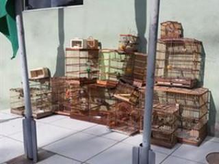 Polícia ambiental prende dois homens e resgata 25 aves silvestres em feira de João Pessoa, PB