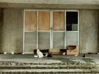 Cães e gatos são abandonados em porta de hospital fechado na Paraíba