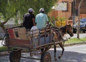 PB: Vereador de João Pessoa quer proibir circulação de carroças na Zona Urbana