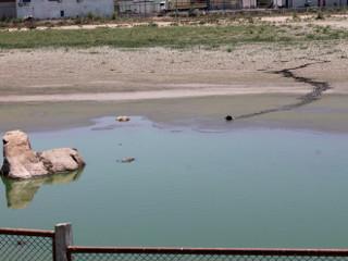 Cachorro cai em lago de estabilização com jacarés e fica preso na lama em Petrolina, PE