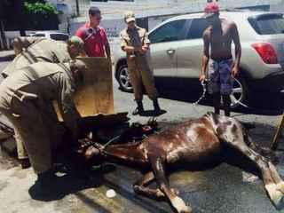Égua é resgatada após maus-tratos em Recife, PE