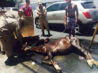 Poder público sem preparo para coibir maus-tratos a animais em Recife, PE