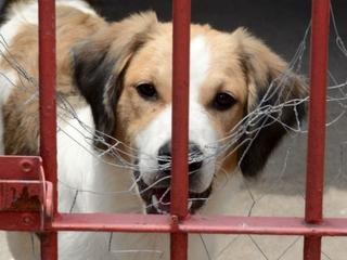 Projeto recolhe cães das ruas de São Bento do Una, PE