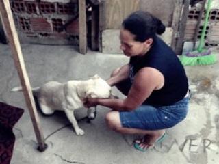 Desempregada cuida de 40 animais recolhidos das ruas de Caruaru, PE