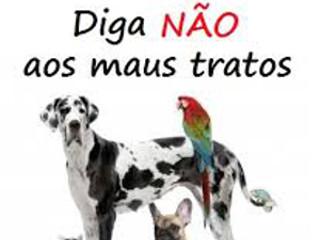 Denúncia de maus-tratos leva a PM retirar dois cães de residência em Bandeirantes, PR