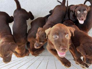 PR: Londrina inicia programa de castração gratuita de animais