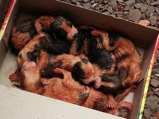 Cachorros recém-nascidos são abandonados em saco de ração fechado em Marechal Cândido Rondon, PR