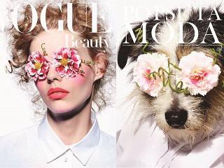 Organização troca modelos em capas de revistas famosas por cães de abrigo para incentivar adoção