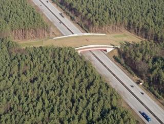 Pontes sobre as rodovias oferecem travessia segura aos animais