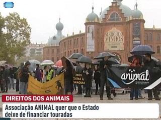 Associação ANIMAL quer que o Estado de Portugal deixe de financiar touradas