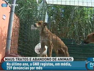 Portugal: GNR regista 259 denúncias mensais por maus-tratos e abandono de animais