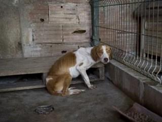 24 cães apreendidos por suspeita de maus-tratos, em Portugal