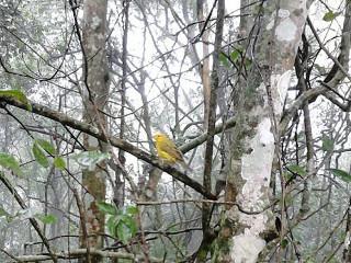 Mais de 80 animais silvestres são devolvidos à natureza em Campos, RJ