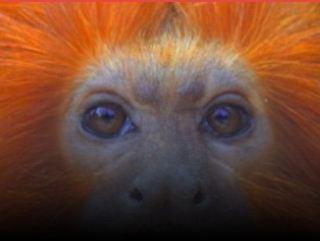 PR: Congresso em Curitiba debate Direito dos Animais e quer mostrar que também são sensíveis