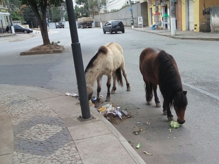 RJ Nogueira cavalos abandono H